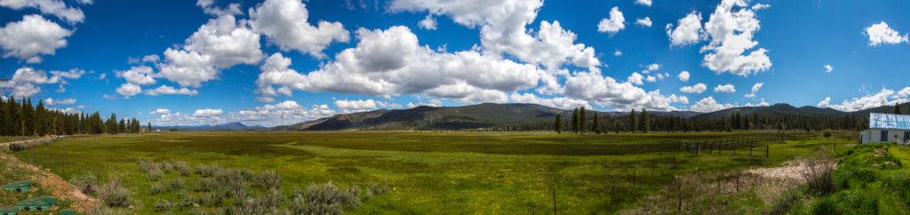 Sierraville Springs Meadow